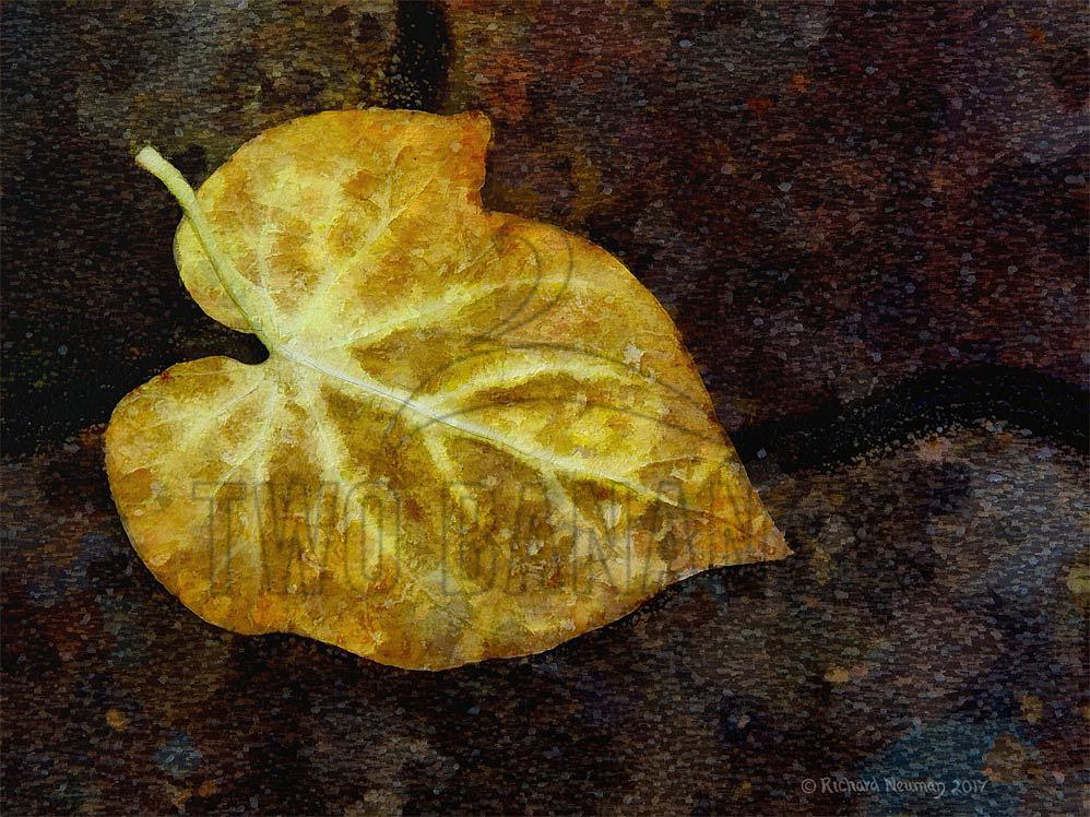 leaf-on-sidewalk-osaka-japan-sidewalk-art-print-richard-neuman-two-bananas-art