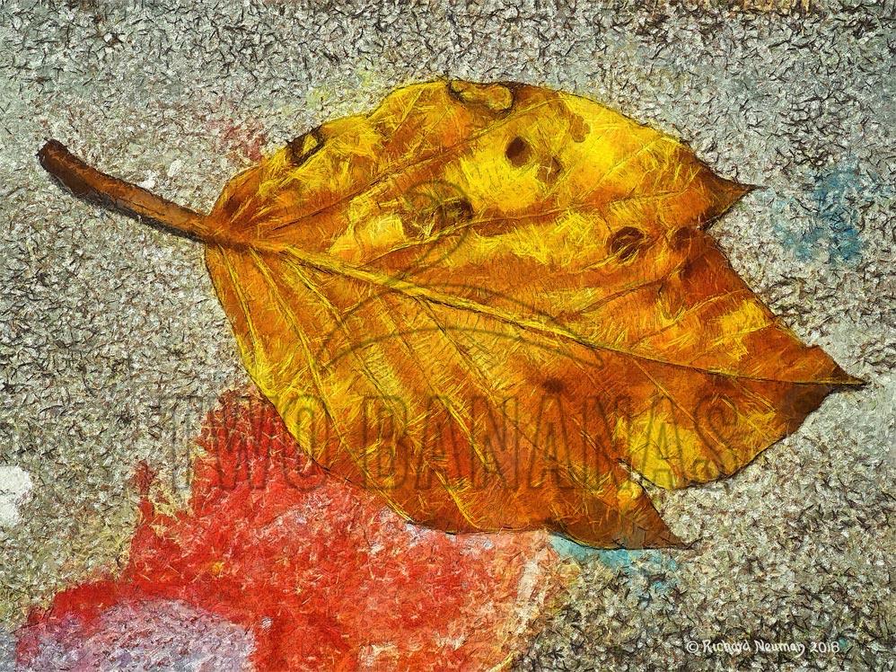 leaf-and-paint-hualien-taiwan-sidewalk-art-print-richard-neuman-two-bananas-art