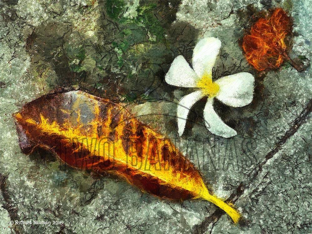blossom-with-leaves-vung-tau-vietnam-sidewalk-art-print-richard-neuman-two-bananas-art