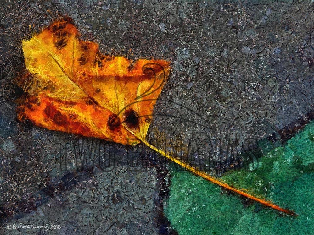 orange-gold-leaf-osaka-japan-sidewalk-art-print-richard-neuman-two-bananas-art
